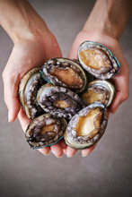 Fresh Raw Abalone On The Chef's Hand
