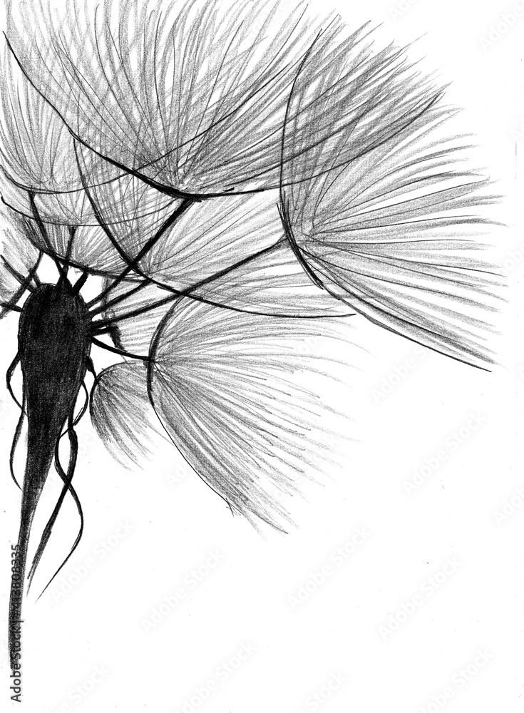 Obraz dmuchawce - rysunek ołówkiem - pionowo fototapeta, plakat