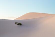 Early Morning Light On Sand Dunes Jurien Bay Area Western Australia