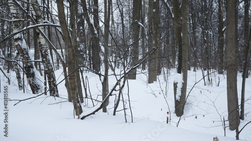 Fototapety, obrazy: trees in the snow
