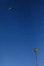 Plane Flying Over Single Palm Tree Against Bright Blue Sky