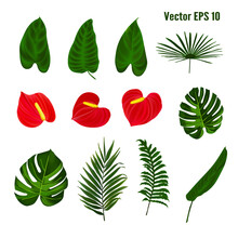 Wedding Invitation. Invitation To A Celebration, Holiday. Botanical Illustration. Tropical Leaves. Vector Drawing.