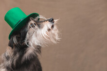Dog In A Hat For St Patrick's Day