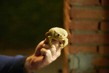 A Hand Holds A Toad In The Night