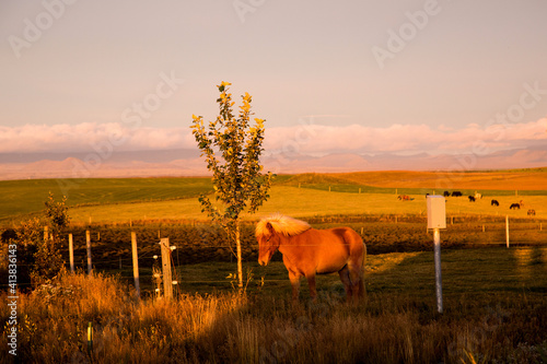 Horse standing behind fence at sunset in Iceland