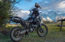 Southern Crested Caracara (caracara Plancus) Sitting On Motorbike