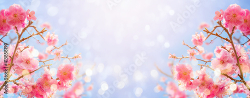 Fototapeta Beautiful cherry blossom flowers over blurred background. Spring season concept obraz