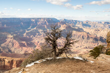 A Bare Juniper Tree Stands On The Edge At The Grand Canyon