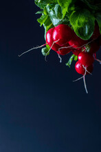 Bunch Of Fresh Radish On A Black Background With Roots. Image With A Selective Focus