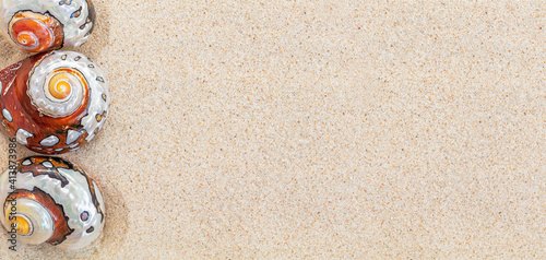 Brown sea shells nautilus on clean white sand, copy space, top view, banner Fototapet