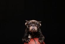 Image Of Dog Basketball Dark Background