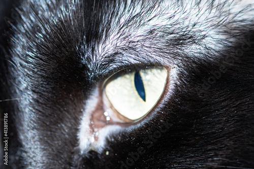 Fotografie, Obraz Mirada de gato