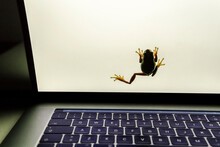 Close-up Of Frog Climbing On Laptop Computer