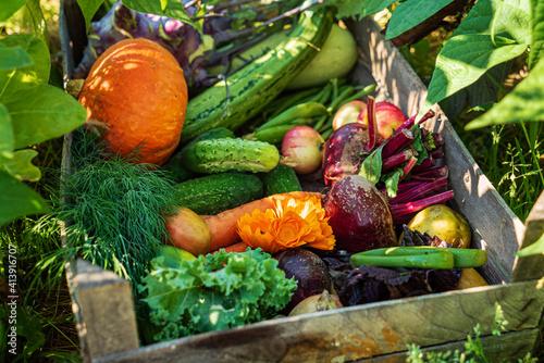 Fototapeta fresh organic vegeatables in the box obraz