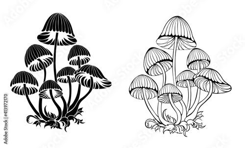 Fotografia Silhouette hallucinogenic mushrooms