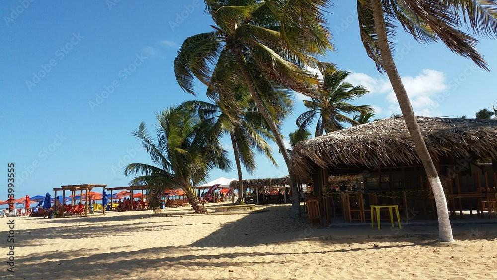 Fototapeta beach with palm
