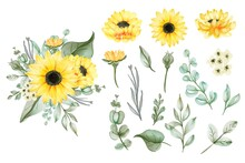 Set Of Isolated Watercolor Yellow Sun Flower Leaves