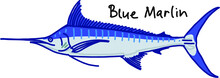 Blue Marlin Fish Isolated On White Background