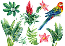 Parrot And Tropical Plants Set. Palm Leaves, Guzmania Flower, Hand Drawing, Watercolor Botanical Painting