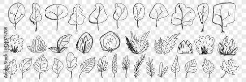 Fototapety, obrazy: Leaves from trees and plants doodle set. Collection of hand drawn natural elegant leaves fallen from trees and plants natural elegant pattern isolated on transparent background