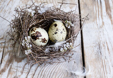 Quail Eggs In A Bird's Nest On A Wooden Background.