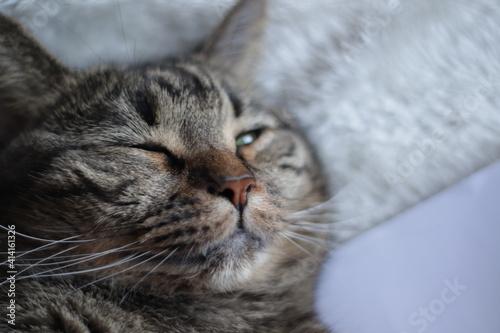 Fotografie, Obraz gato durmiendo