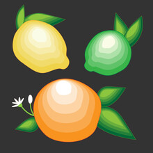 Citrus: Lemon, Lime, Orange. Vector Illustration