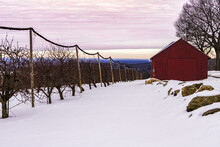 A Red Barn On The Edge Of An Orchard Just Before Sunset.