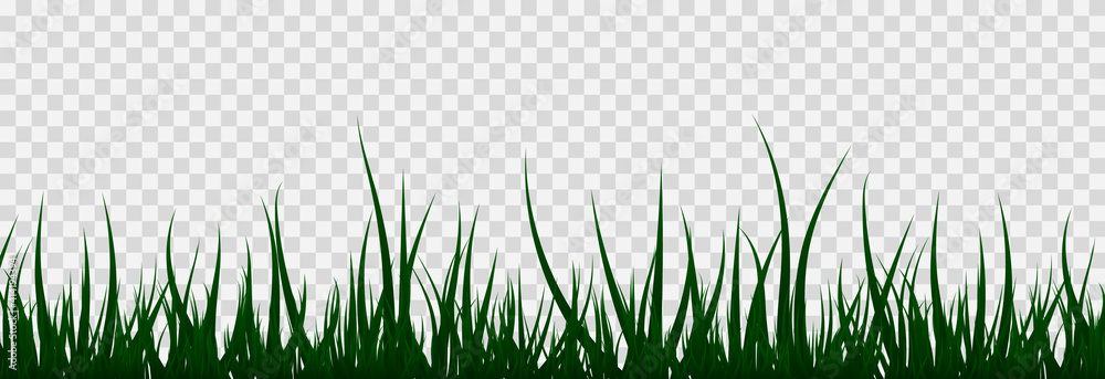 Fototapeta Grass, lawn, field. The illustration is drawn on a white background.