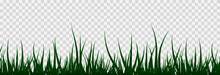 Grass, Lawn, Field. The Illustration Is Drawn On A White Background.
