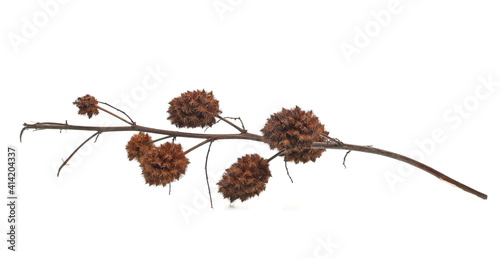 Fotografie, Obraz Dry burdock seeds isolated on white background
