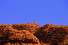 Lone Tree On A Red Rock Hill In The Outback Of The North Territory, Australia.