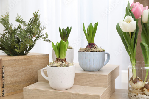 Fototapeta premium Potted hyacinth plants and tulips with bulbs on wooden table