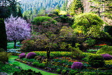 Butchart Gardens, Victoria, British Columbia, Canada. Spring Flowering Trees, Flowers And Shrubs At The Sunken Garden