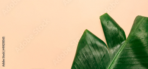 Fototapeta Fresh green banana leaf with water drops on beige background, space for text obraz