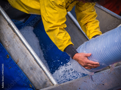Fototapeta Ice flows into the hold of a fishing boat in Bristol Bay Alaska