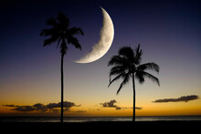 Palm Trees On Beach In Hawaii With Moon In Sky