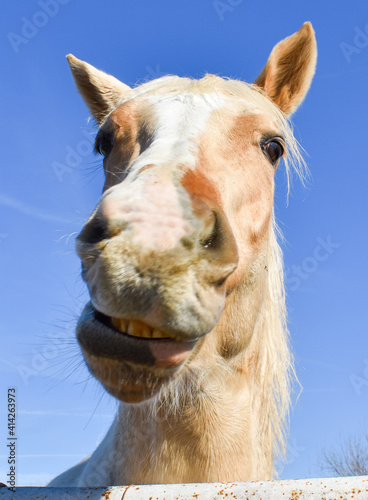 Obraz na plátně Funny cute and goofy horse smiling showing lips and teeth