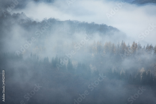 Vászonkép 霧の森の写真素材シリーズ