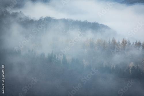 Photo 霧の森の写真素材シリーズ