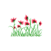 Beautiful Poppies On White Background, Great Design For Any Purposes. Vintage Illustration. Stock Image. EPS 10.