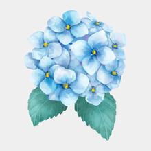 Flower Hydrangea Drawing Vector Botanical Clipart