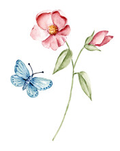 Flower And Butterfly, Watercolor  Botanical Drawing.