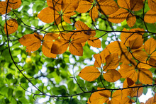 Colorful Autumn Leafs .nature In Autumn Time