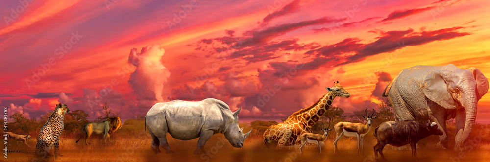 Fototapeta Banner panorama of Big Five and wild animals collage with african landscape at sunrise in Serengeti wildlife area, Tanzania, East Africa. Africa safari scene in savannah landscape.