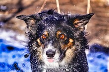 Portrait Of A Dog In The Snow