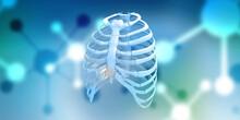 3d Render Rib Cage Bones. Human Skeletal System
