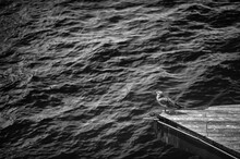Black And White Photo Of A Seagull Standing On The Edge Of A Wooden Platform Over The Sea.