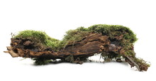 Green Moss On Tree Rotten Stump Isolated On White Background