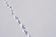 Left Deep Footprints In The Snow